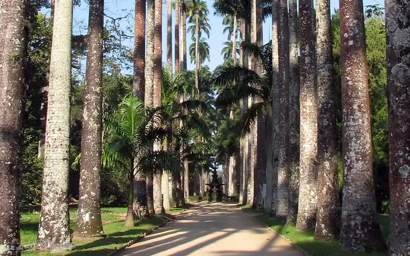 JARDIM BOTÂNICO DO RIO: Natureza, Parquinho e Cultura